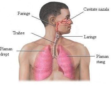 Programul care contribuie la restabilirea funcţiilor sistemului respirator