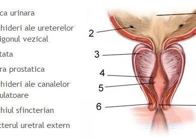 Programul «Longevitatea masculină» (benefic în cazul afecţiunilor inflamatorii ale prostatei)